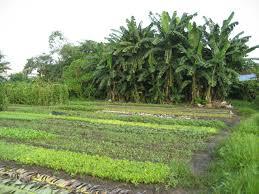 Tư vấn pháp luật miễn phí đối với thủ tục chuyển đổi mục đích quyền sử dụng đất