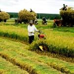Bồi thường thu hồi đất nông nghiệp thuộc quỹ đất công ích
