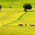 Hạn mức giao đất nông nghiệp và thủ tục đăng ký biến động
