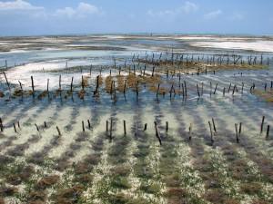 Thủ tục xin giao đất nuôi trồng thủy sản cho hộ gia đình