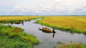 Trình tự thuê đất nông nghiệp vượt hạn mức giao đất