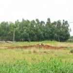 Chuyển mục đích sử dụng đất từ đất trồng cây lâu năm sang đất ở